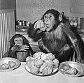 Chimpansees Hilda en Tilly uit Artis, Bestanddeelnr 917-2816.jpg