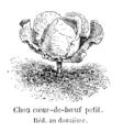 Chou cœur-de-bœuf petit Vilmorin-Andrieux 1904.png