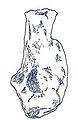 Chubutisaurus insignis.jpg