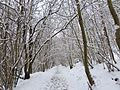 Church Stile Woods under snow - Flickr - gailhampshire.jpg