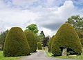 Churchyard yews, Baslow.JPG