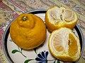Citrus sulcata.jpg
