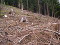 Clearcutting in German alps 2.jpg