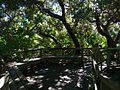 Cocoa Beach at Lori Wilson Park - Flickr - Rusty Clark (36).jpg