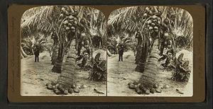 Frederick Langenheim - American Stereoscopic Company stereocard
