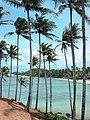 Coconut Tree Hill.jpg