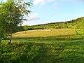 Coed Keri at Hafotty Newydd (geograph 2978715).jpg