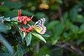 Colorful Butterfly in flower.jpg