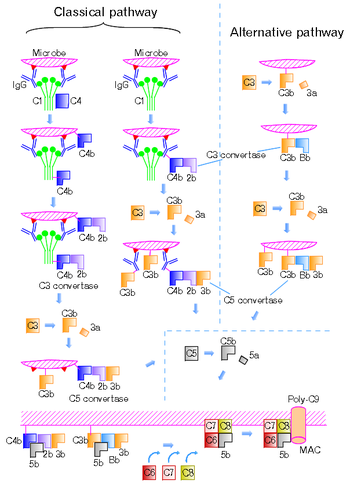 The Complement System Concept Map.Complement System Wikipedia