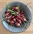 Confinement 2020 - troisième récolte de radis.jpg
