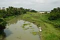 Confluence - River Hooghly and River Saraswati - Tribeni - Hooghly - 2013-05-19 7722.JPG