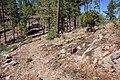 Continental Divide Trail, Black Range - Flickr - aspidoscelis.jpg