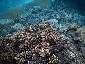 Naviti - Image: Coral reef, Naviti island, Yasawa, Fiji August 2016