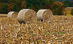 Baled corn in a field in Perry Township