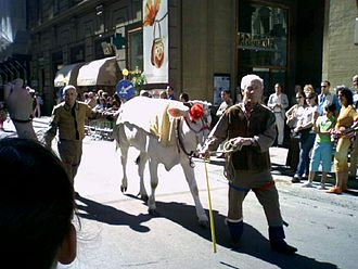 Calcio Fiorentino - Former first prize of the palio, a chianina calf