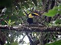 Costa Rica - Arenal 01.jpg