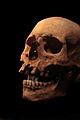 Cráneo con dupondio.JPG