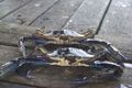 Crabs on dock.jpg
