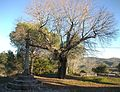 Creu i arbre davant de l'ermita de la Mare de Déu de la Consolació, Llutxent.JPG
