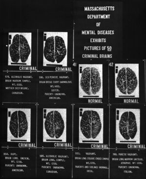 A 1920s display comparing brain types to crimi...