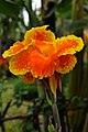 DGJ 0551 - Ho Chi Minh Flower (3371595924).jpg