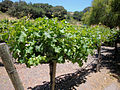 DSC28057, Chateau Julien Winery, Carmel, California, USA (5916654227).jpg