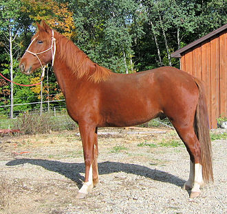 Mountain Pleasure Horse - Mountain Pleasure Horse.