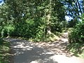 Dappled shade at Capler Wood - geograph.org.uk - 547557.jpg