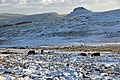 Dartmoor Ponies and Leather tor.jpg
