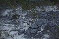 Dead roots, lithified dune ridge. San Salvador (37983332175).jpg