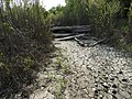 Dead tree and animal tracks in St. Norbert Provincial Park.jpg