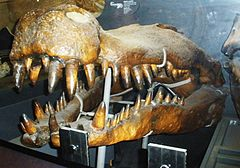240px deinosuchus rugosus