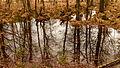 Delleboersterheide – Catspoele Natuurgebied van It Fryske Gea. Omgeving van het heideveld 044.jpg
