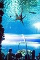 Den Bla Planet Danmarks akvarium 20130427 0396F (8710851813).jpg
