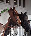 Derby track ponies 2011.jpg