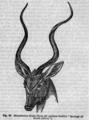Descent of Man - Burt 1874 - Fig 64.png