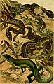 Deutschlands Amphibien und Reptilien (1890) (20700518408).jpg