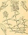 Die Pflanzenfeinde aus der Klasse der Insekten. Ein nach Pflanzenfamilien geordnetes Handbuch sämmtlicher auf den einheimischen Pflanzen bisher beobachteten Insekten zum Gebrauch für Entomologen, (20751813858).jpg