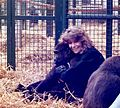 Director Allison Argo with Gorilla, 1990.jpg