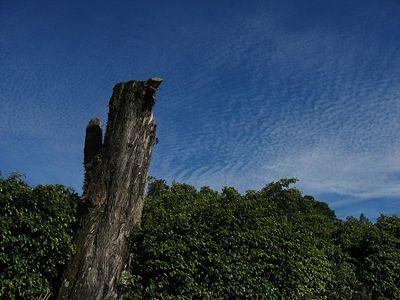 DirkvdM bush-clouds.jpg