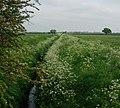 Ditch between fields - geograph.org.uk - 817646.jpg