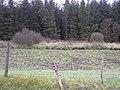 Doagh Glebe - geograph.org.uk - 1166557.jpg