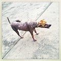 Dog - panoramio (4).jpg