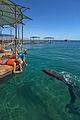 Dolphin Reef in Eilat (7716966506).jpg
