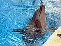 Dolphins (7980902633).jpg