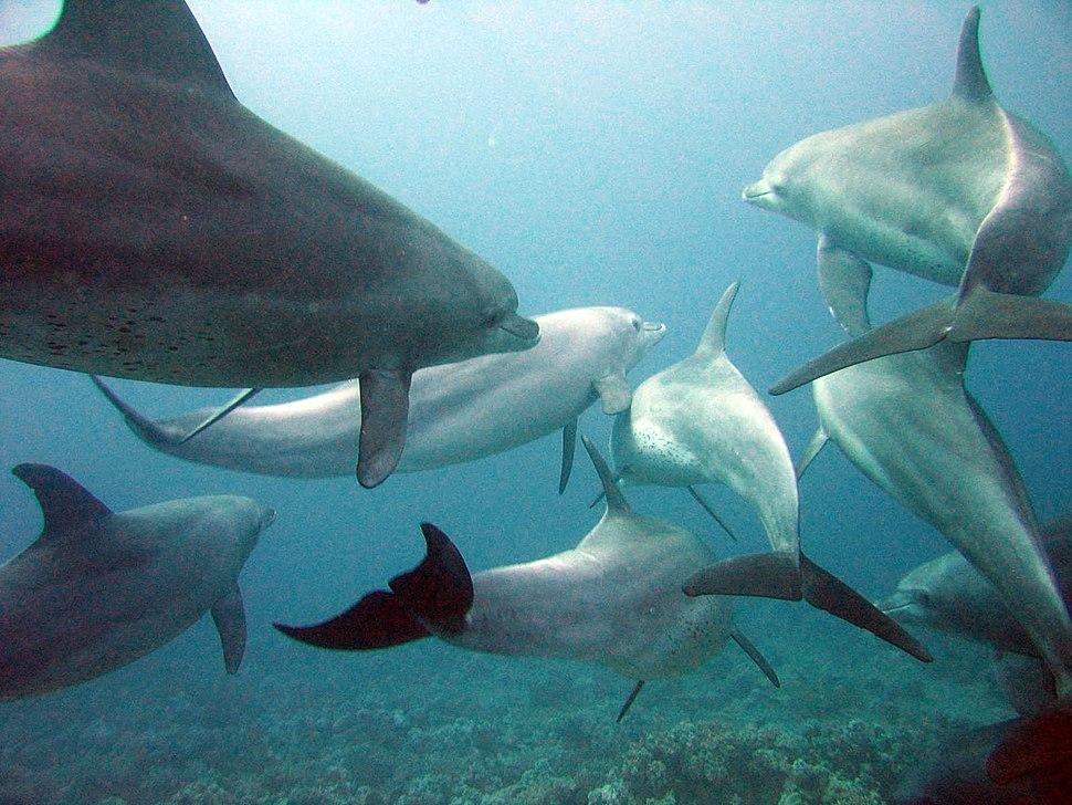 Dolphins gesture language