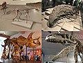 Dracohors.jpg