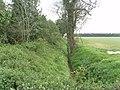 Drainage Ditch alongside Winter's Plantation - geograph.org.uk - 440059.jpg