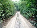Drum forestier - Boia Bârzii - panoramio (1).jpg