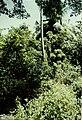 Drupadia hayashii, habitat on Sibutu Island.jpg